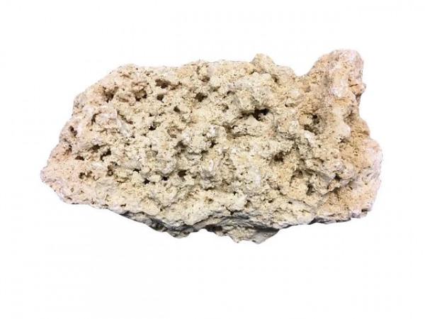 Rpck Reef Gestein